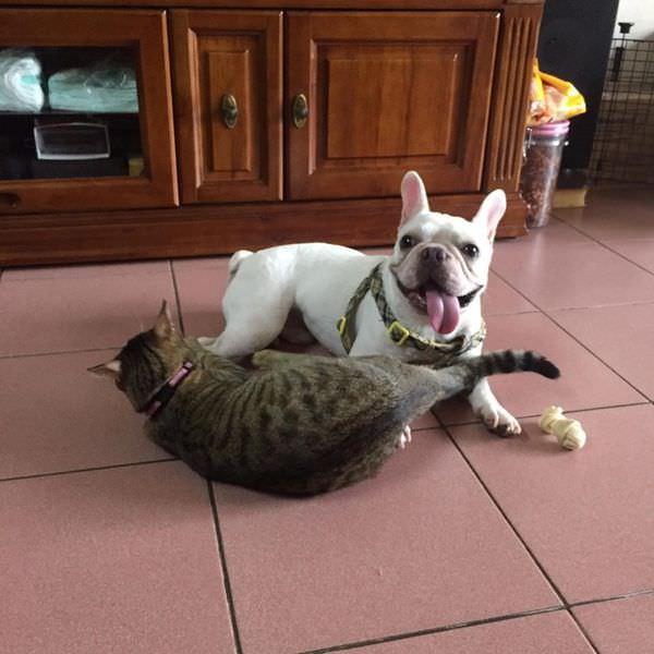 【寵物】魏大夫特選成貓配方,寵物飼料的第一選擇